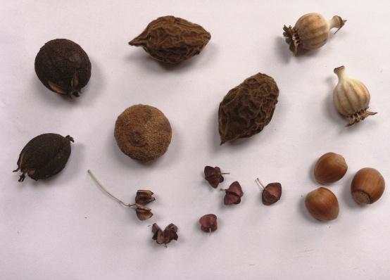 noten-en-zaden